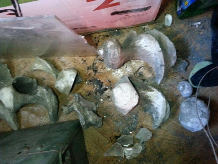 Bild 3: Kleine fossilien sammlung