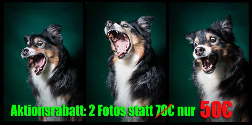 Lekkerli-Schnapp-Fotos - Aktionspreis! - Mischlingshunde - Bild 1