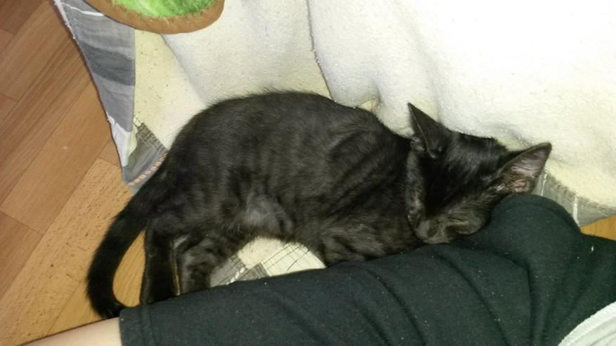 2 kleine Kater suchen ein liebevolles Zuhause - Mischlingskatzen - Bild 1