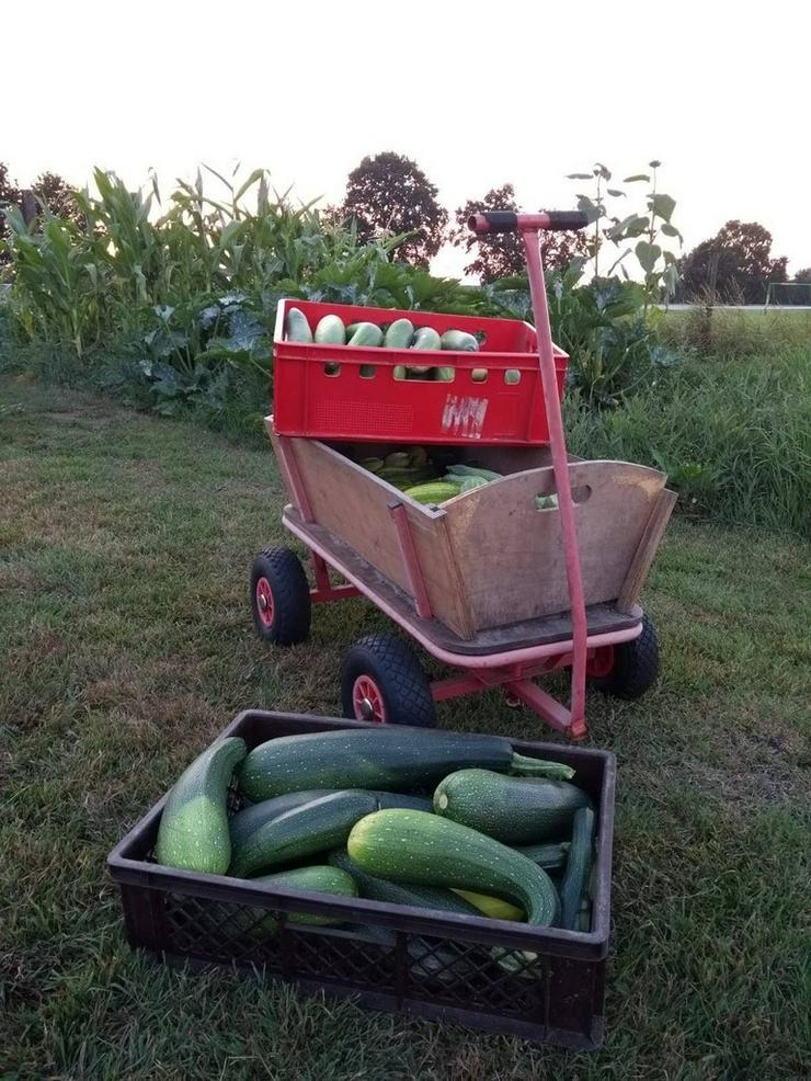 Bild 2: Gemüse aus eigenem ökologischem Anbau