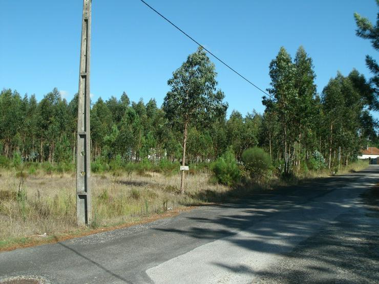 Grundstück 2.000m2, Silberküste, Portugal - Grundstück kaufen - Bild 1