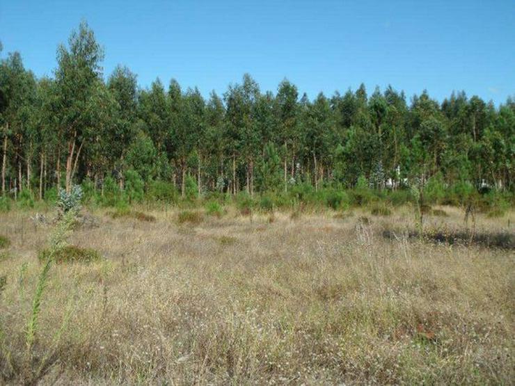 Bild 3: Grundstück 2.000m2, Silberküste, Portugal