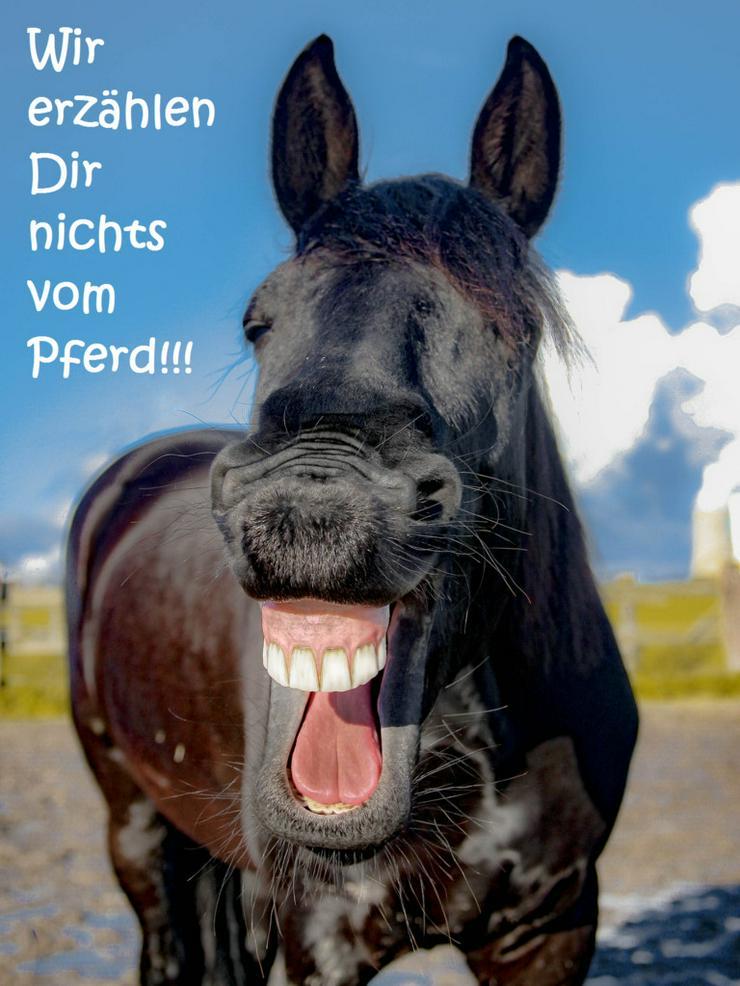 Wir erzählen Ihnen nichts vom Pferd! - Pflegepersonal - Bild 1