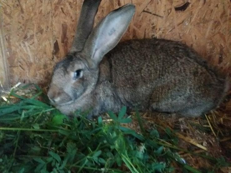 Bild 5: Wegen Zuchtaufgabe schöne Tiere abzugeben