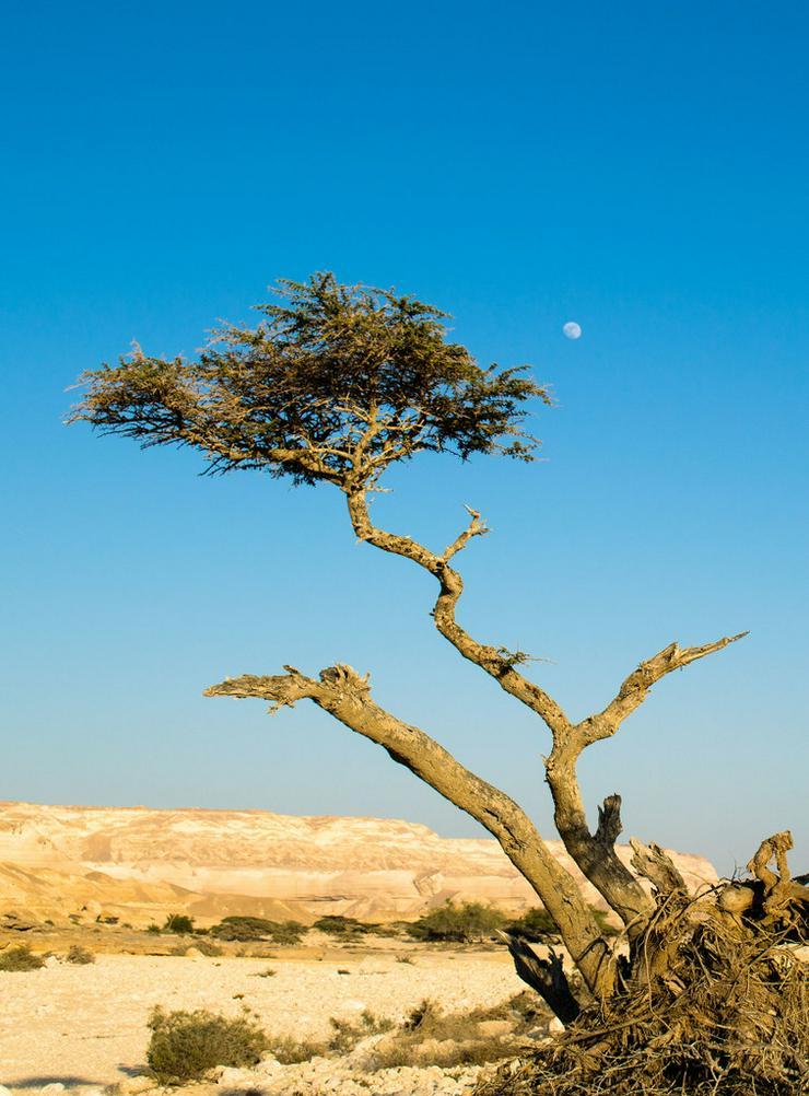Bild 4: Saisonale/ Permanente Stellen in Oman