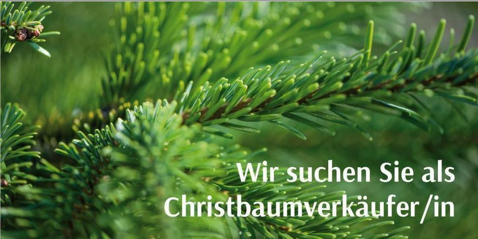 Christbaumverkäufer-/in für Dezember 2021
