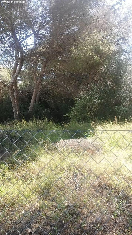 "Bild 2: Grundstueck in 07660 - Cala D""Or"