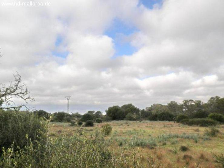 Bild 5: Grundstueck in 07650 - Santanyi