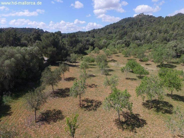 Grundstueck in 07500 - Manacor - Grundstück kaufen - Bild 1