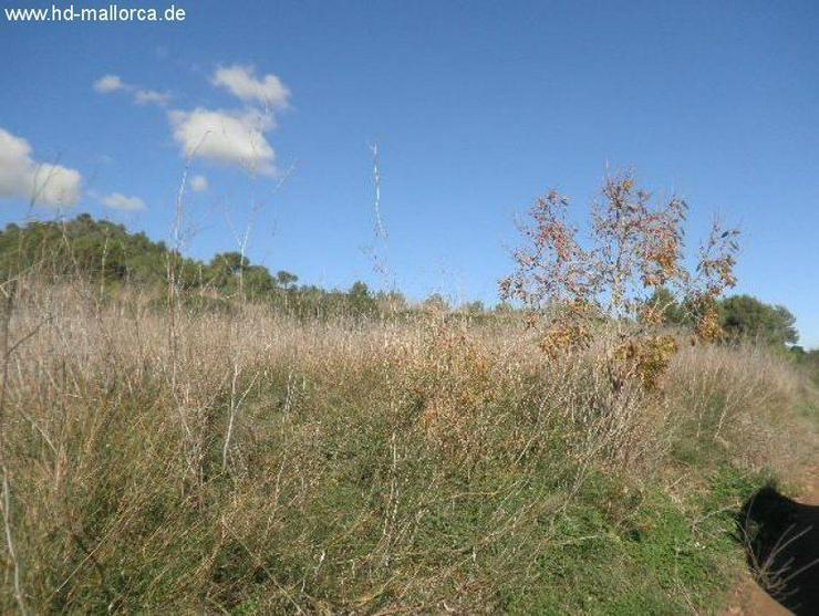 """Bild 2: Grundstueck in 07669 - S""""Horta"""