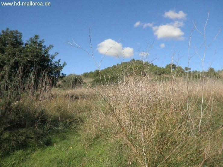 """Bild 6: Grundstueck in 07669 - S""""Horta"""