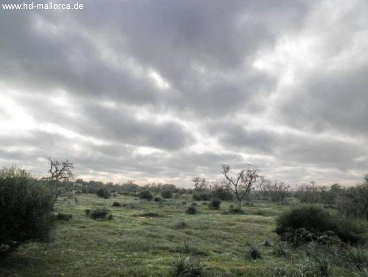 Bild 4: Grundstueck in 07690 - Cala Llombards