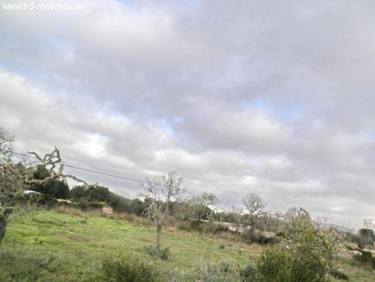 Bild 3: Grundstueck in 07690 - Cala Llombards