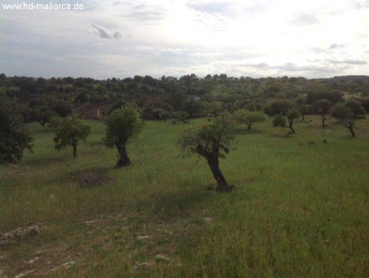 Bild 2: Grundstueck in 07530 - San Lorenzo