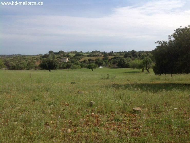 Bild 3: Grundstueck in 07530 - San Lorenzo