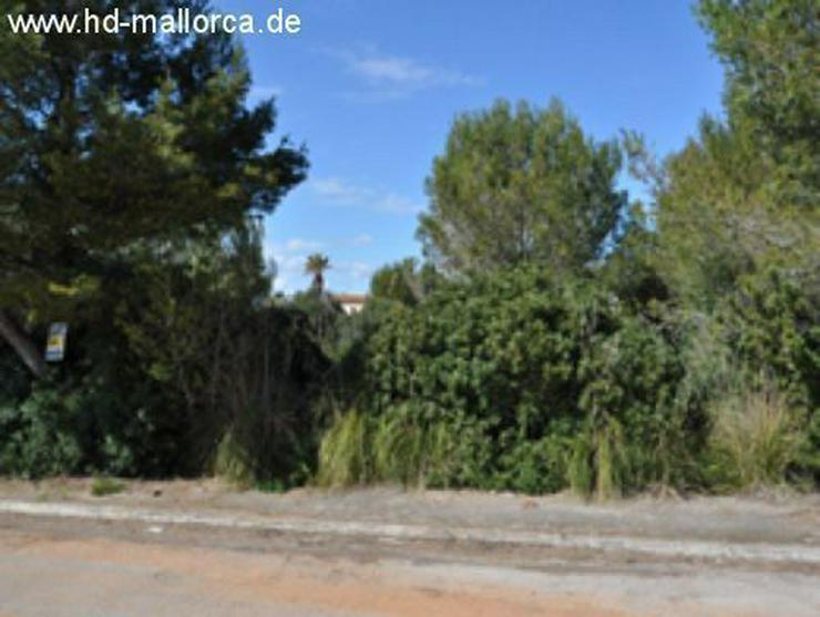 Bild 2: Grundstueck in 07579 - Colonia San Pere