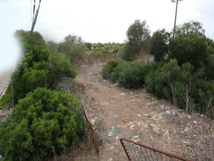Bild 3: Grundstueck in 07689 - Cala Mandia