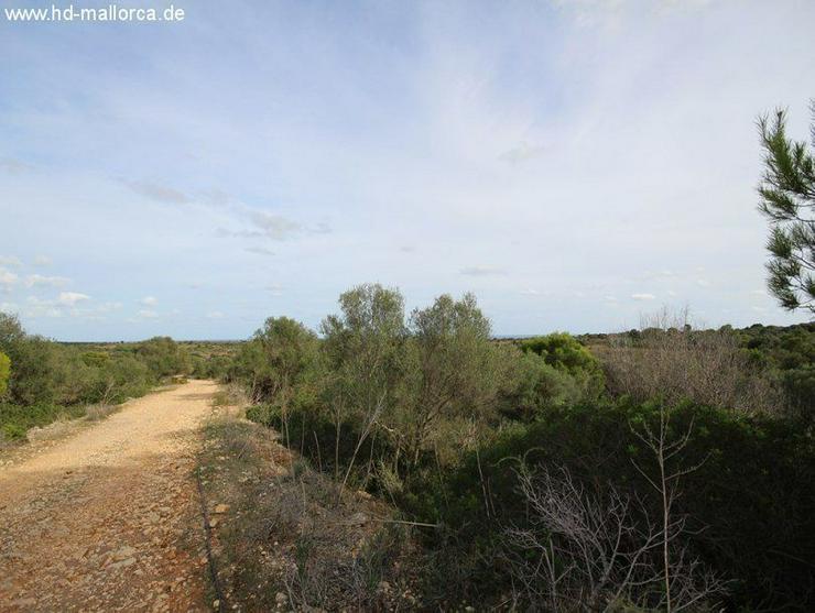 Grundstueck in 07680 - Porto Cristo - Grundstück kaufen - Bild 1