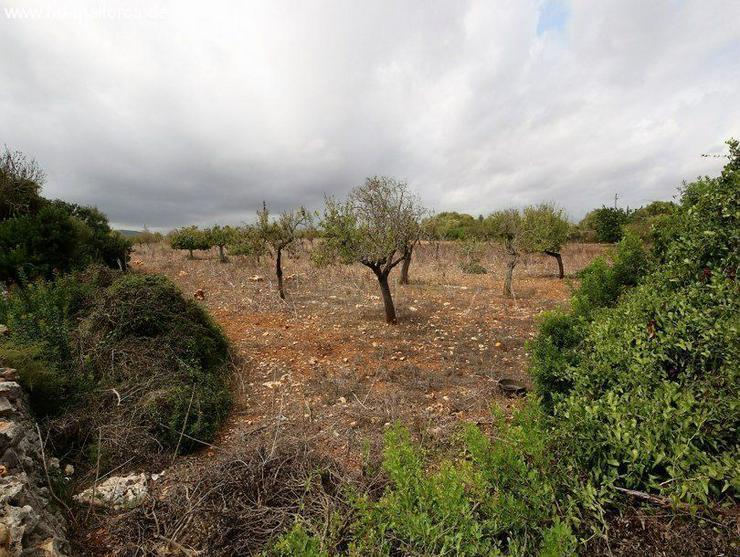 Bild 2: Grundstueck in 07689 - Cala Mandia