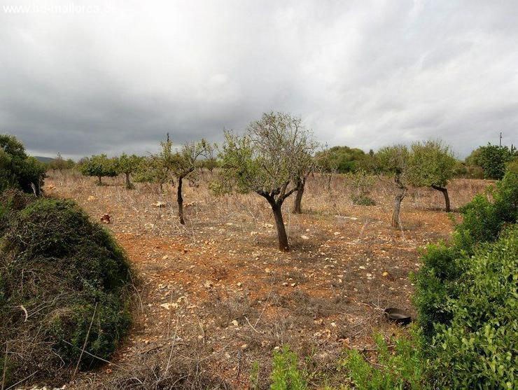 Grundstueck in 07689 - Cala Mandia - Grundstück kaufen - Bild 1