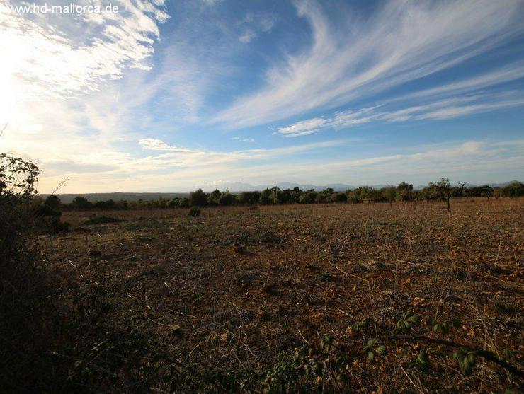 Bild 6: Grundstueck in 07500 - Manacor