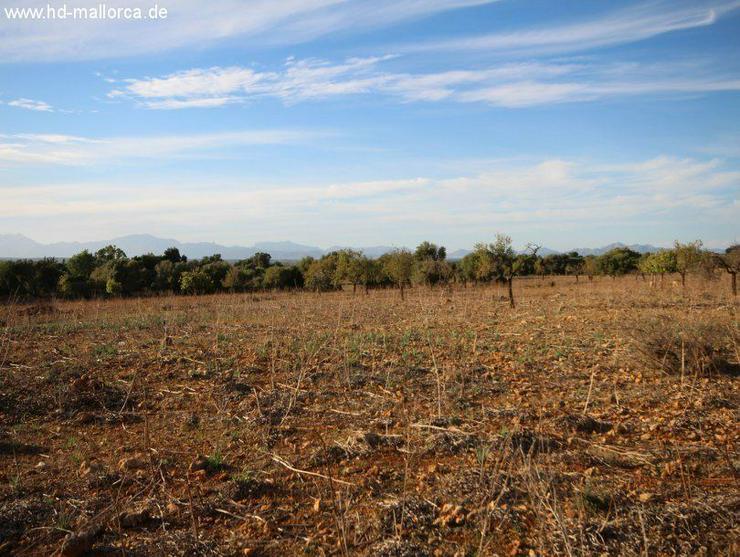 Bild 2: Grundstueck in 07500 - Manacor