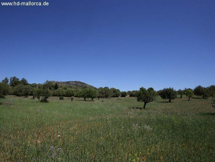 Grundstueck in 07530 - San Lorenzo - Bild 1
