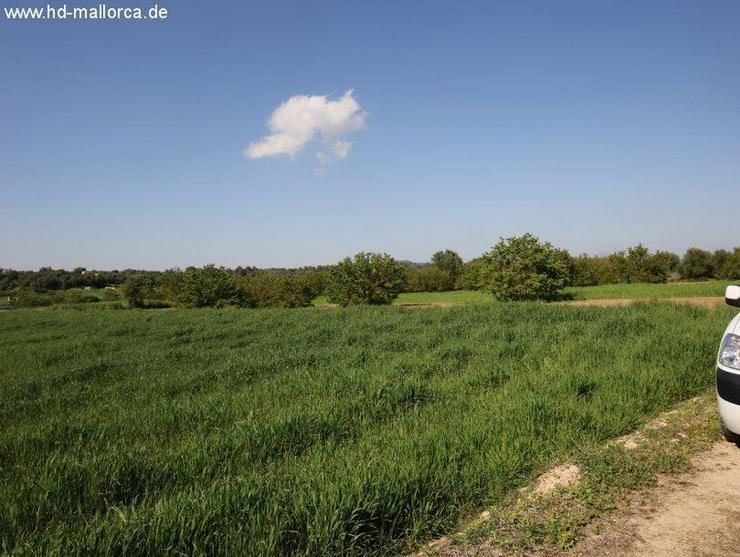 Bild 2: Grundstueck in 07260 - Porreres