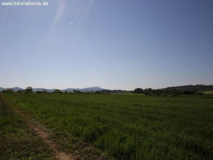 Bild 4: Grundstueck in 07260 - Porreres