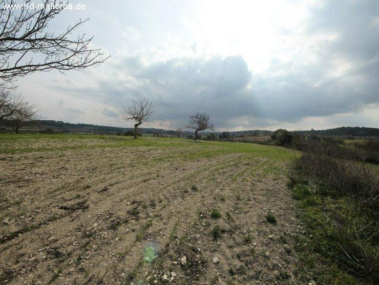 Bild 6: Grundstueck in 07250 - Vilafranca de Bonany