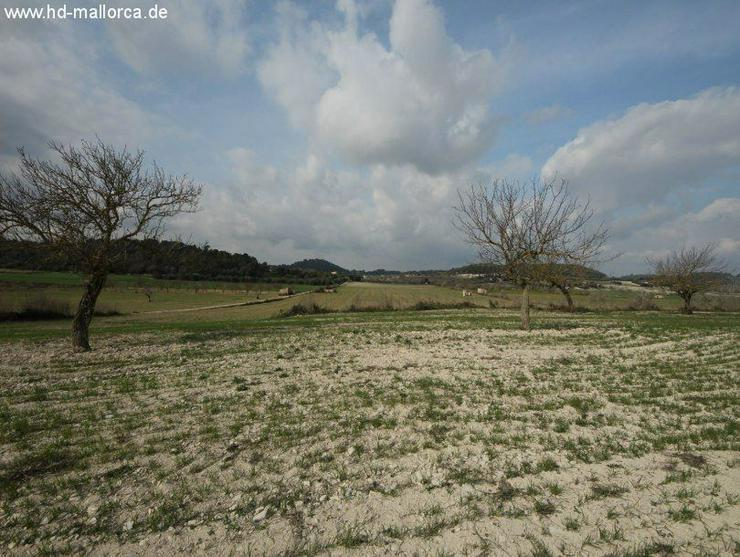Bild 5: Grundstueck in 07250 - Vilafranca de Bonany