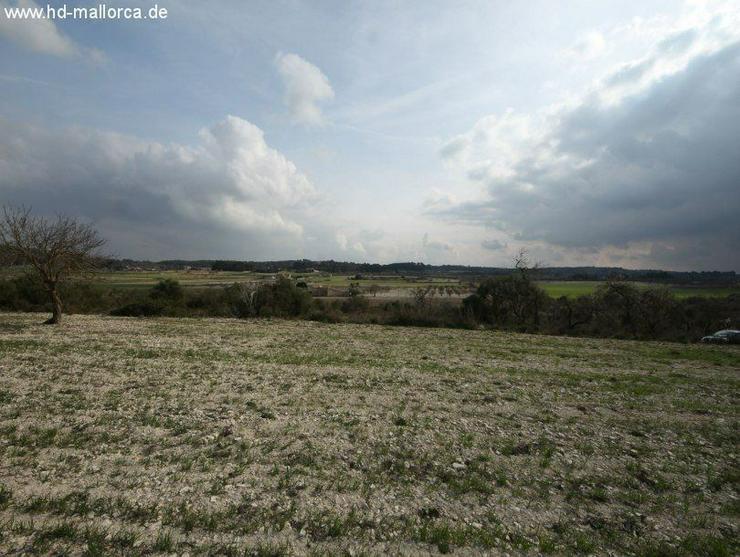 Bild 2: Grundstueck in 07250 - Vilafranca de Bonany
