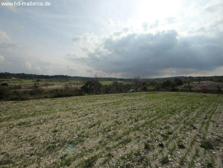 Bild 4: Grundstueck in 07250 - Vilafranca de Bonany