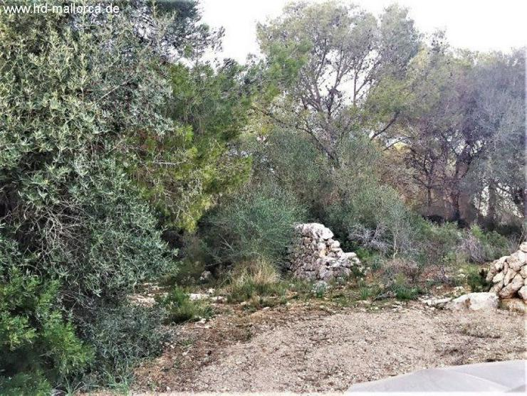Grundstueck in 07650 - Santanyi - Grundstück kaufen - Bild 1