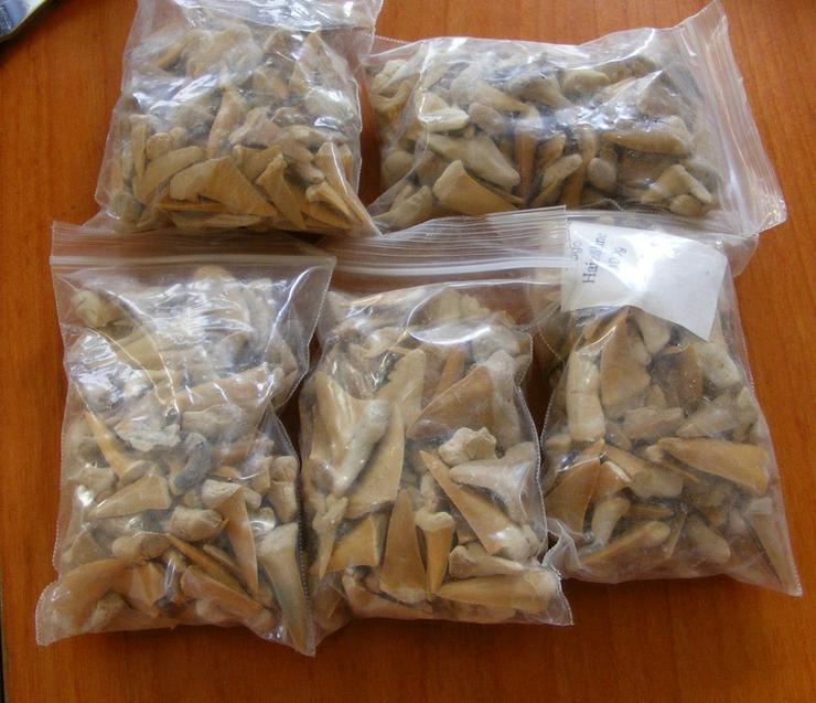Sammlungsauflösung Fossilien Haizähne