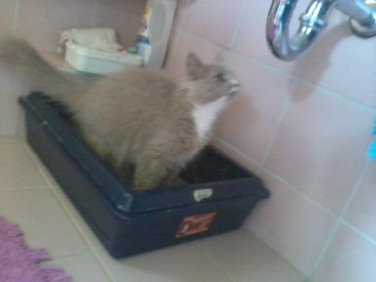 Teenager-Katze