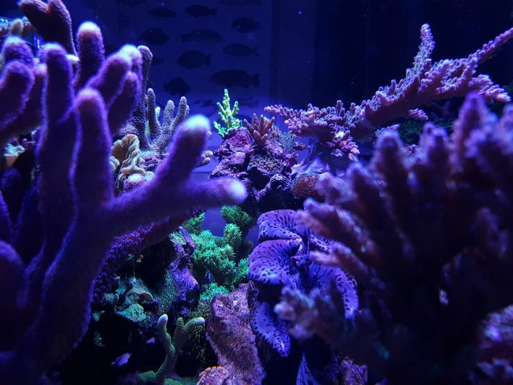 Bild 4: SPS/LPS Korallen - Acropora, Montipora  - 85051