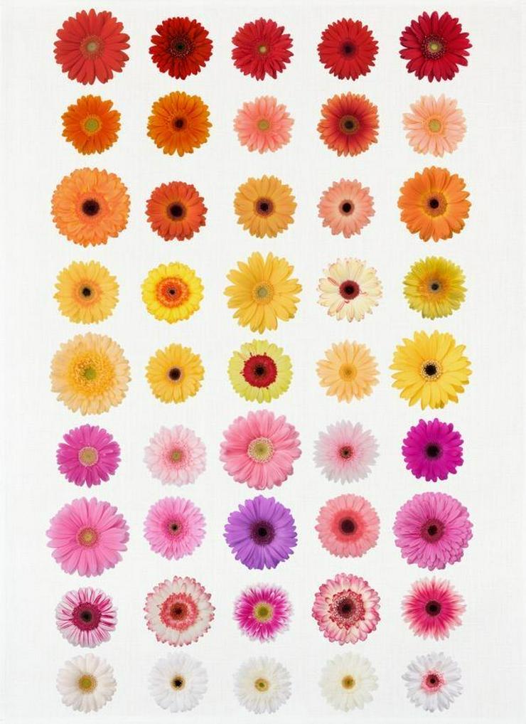 Kracht Geschirrtuch Digitalprint Daisies - Weitere - Bild 1