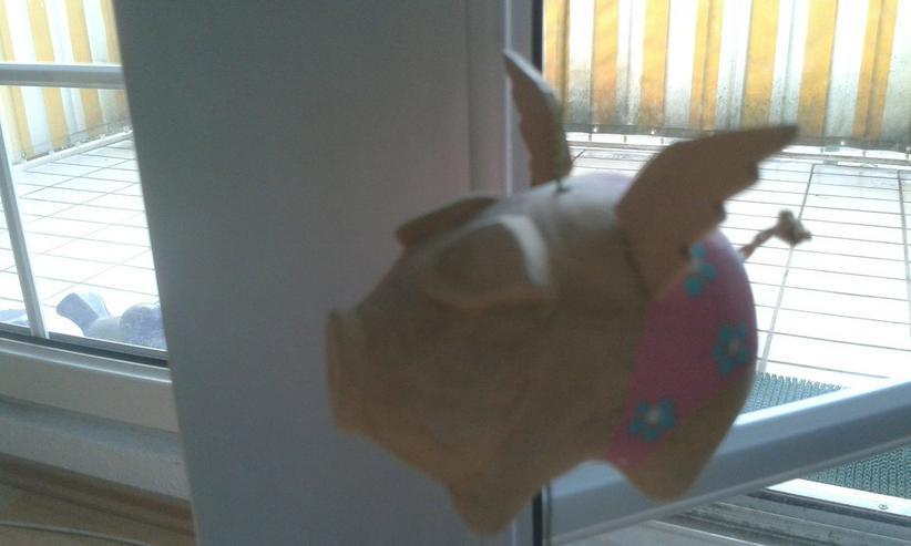 Bild 4: Fliegendes Schweinchen