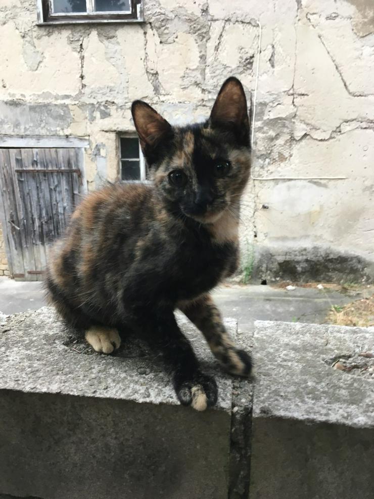 Süsses Schmusekätzchen - Mischlingskatzen - Bild 1