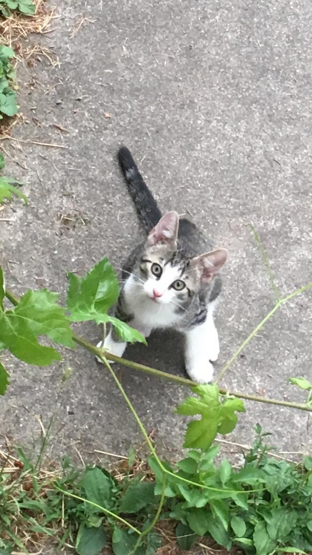 Bild 5: 2 Baby-Katzen Geschwisterchen