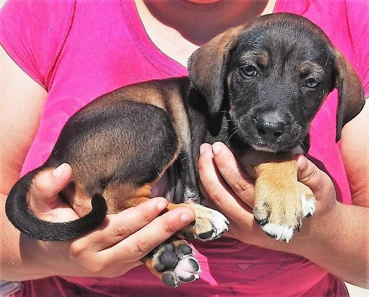 Baby Bub ca. 7/18 geboren - Mischlingshunde - Bild 1