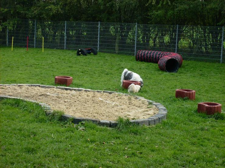 Bild 5: Peacock's Manor - Das 5 Sterne Hundehotel