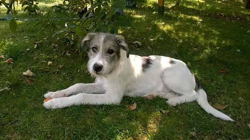 Süße Terriermix-Hündin MAJA sucht ihr Zuhause - Mischlingshunde - Bild 1