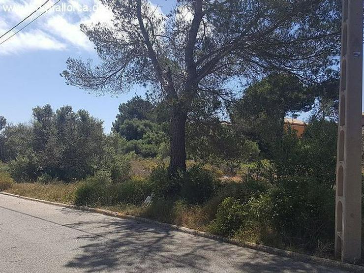 Bild 7: Grundstueck in 07639 - Vallgornera