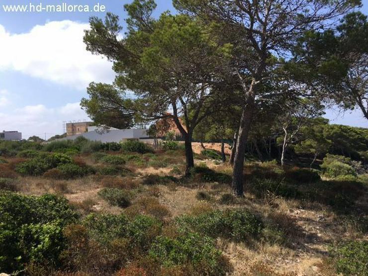 Grundstueck in 07639 - Vallgornera - Auslandsimmobilien - Bild 4