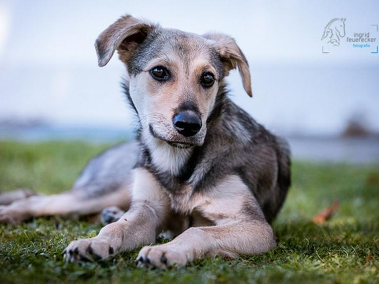 Samui sucht sein Zuhause - Mischlingshunde - Bild 1