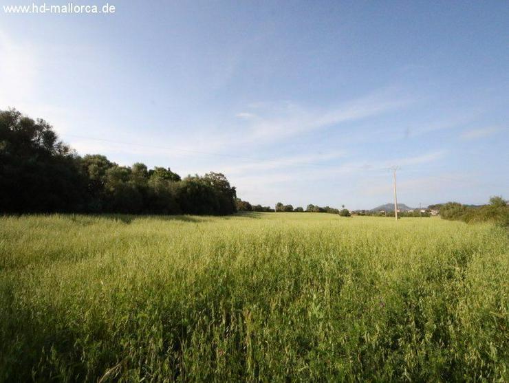 Grundstueck in 07200 - Felanitx - Bild 1