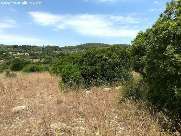 Grundstueck in 07550 - Son Servera - Grundstück kaufen - Bild 1