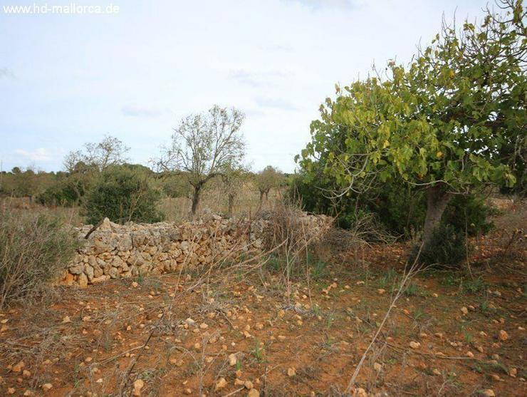 Bild 4: Grundstueck in 07680 - Porto Cristo